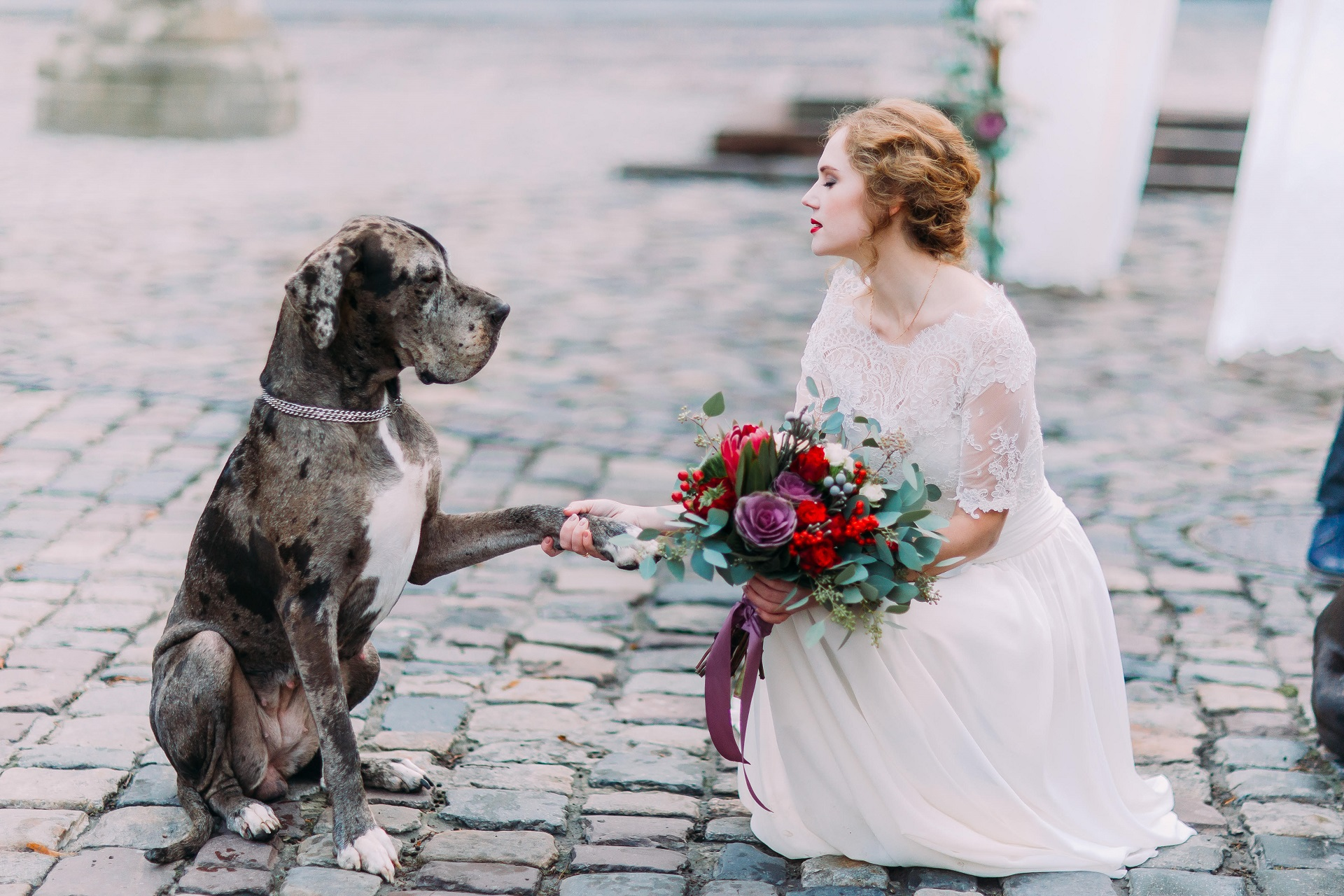 4 Pet friendly wedding venues in the Hartbeespoort area