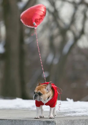 Furry Cuteness Proposal idee